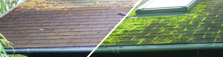 Roof Cleaner Before And After
